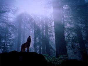 paisajes-lobo